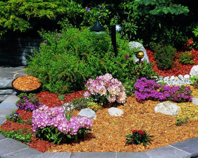 Растения для каменистого сада